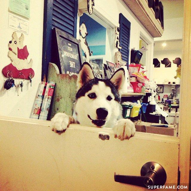 Cameron Dallas Husky Dog Name