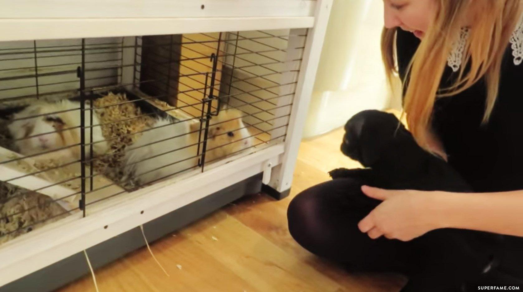 Zoe Sugg with Nala and guinea pigs.