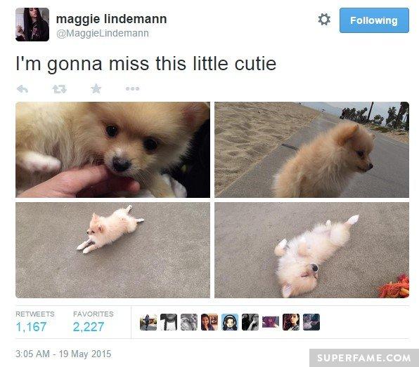 Maggie tweets.