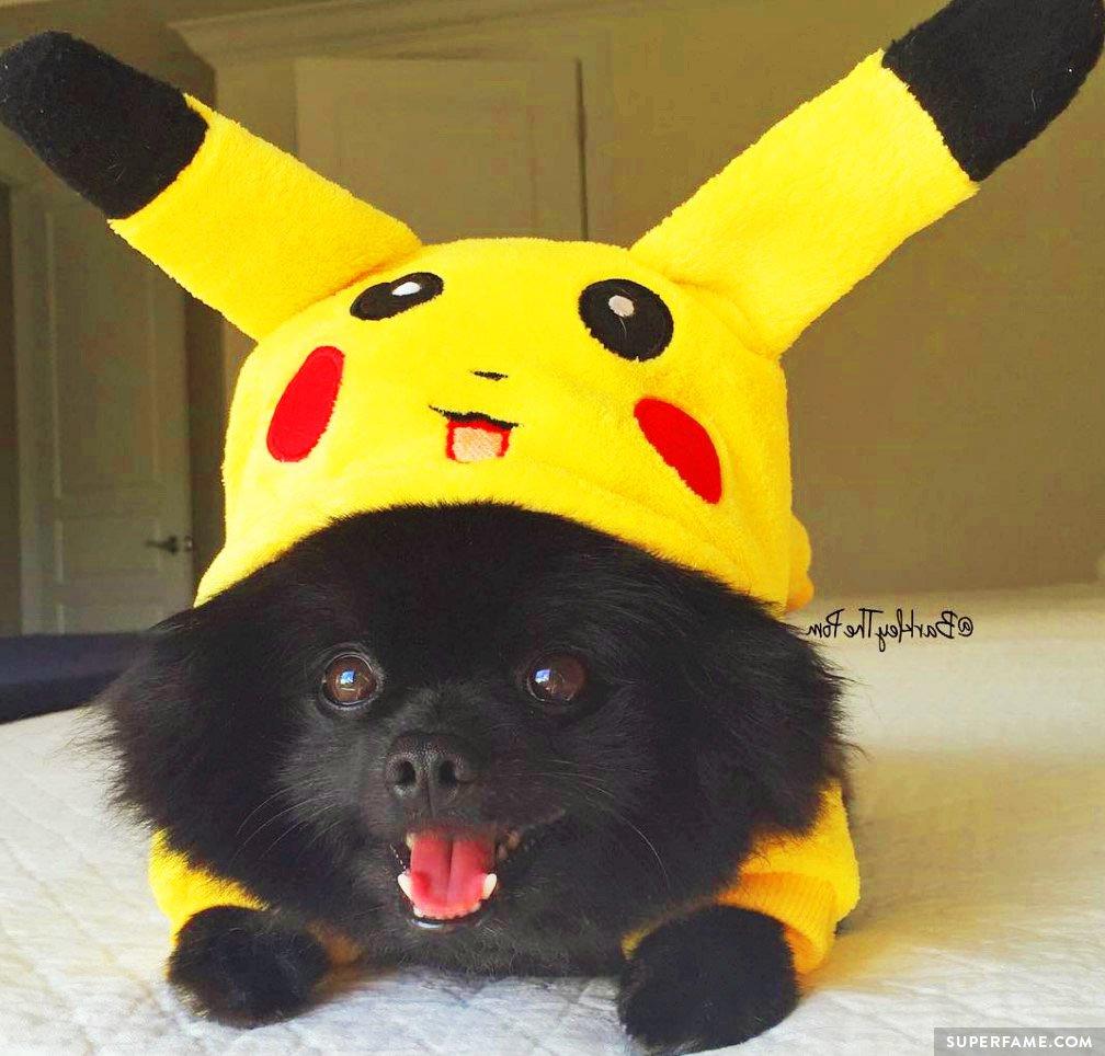 Barkley as Pikachu.