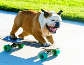 Tillman the skateboarding dog.