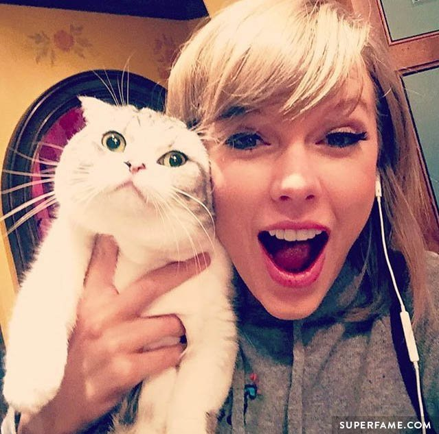 Taylor Swift and a cat.
