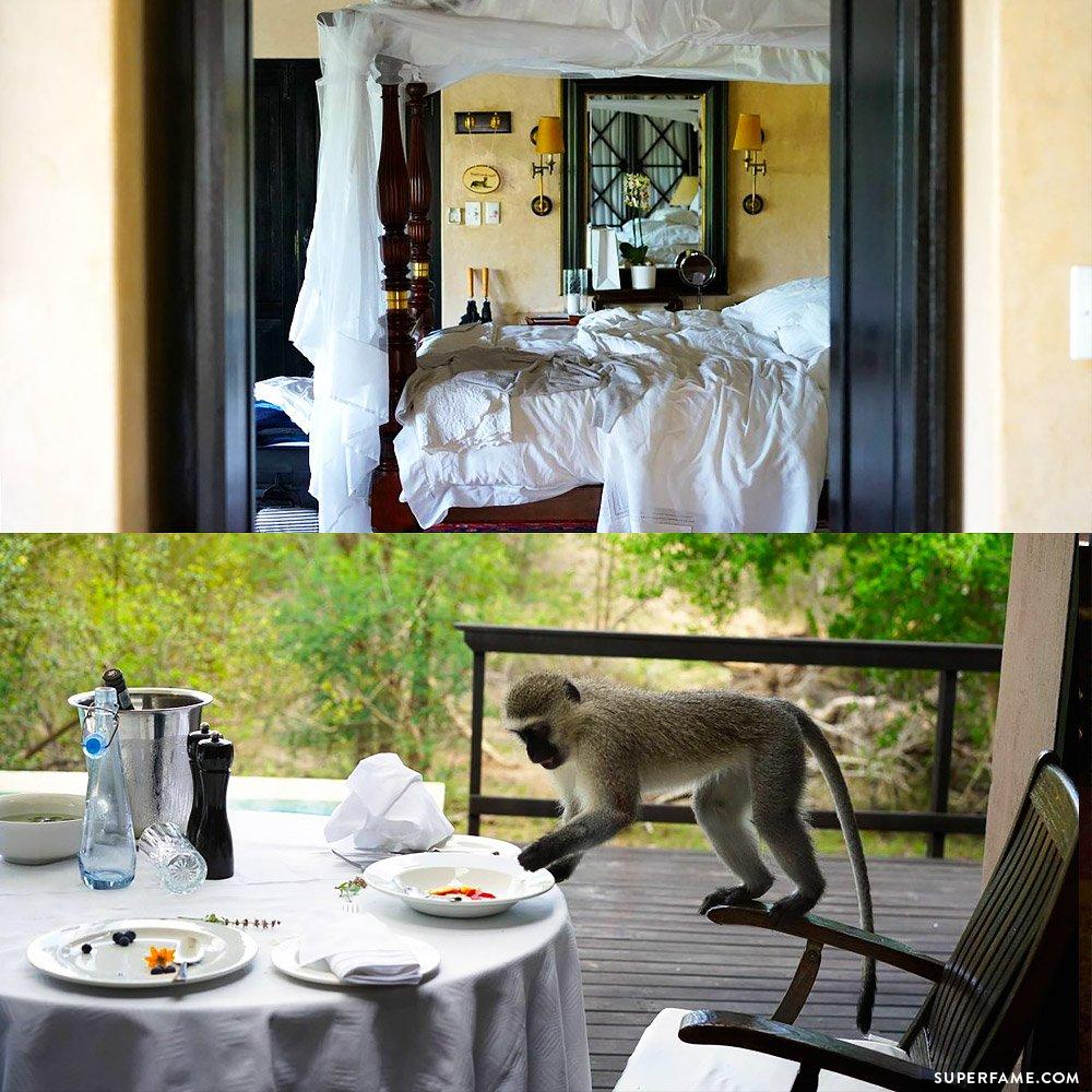 Monkey steals food.